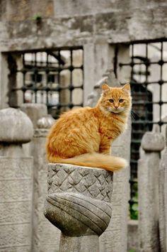 seeyouturkey: Street Cats – Istanbul