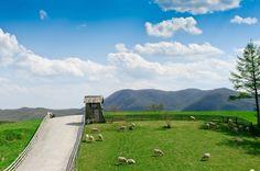 푸른 초원과 맑은 하늘 아래 뛰노는 양들의 낙원, 대관령 양떼목장