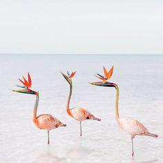 Birds of Paradise ✨