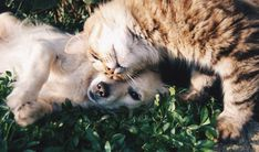 We have looked all over the web to find the perfect happy dog photos for you! Here are 20 dog photos that will make you filled with joy. Fun Facts About Cats, Cat Facts, Pet Psychic, Cs6 Photoshop, Cane Corso, Dog Photos, Beautiful Dogs, Pet Care, Your Pet