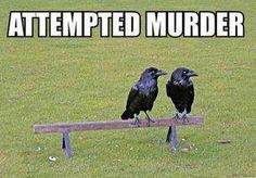 Hahahahahaha.