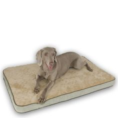 KandH Memory Sleeper S 18x26 Grn -- Quickly view this special dog product, click the image : Pet dog bedding