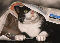 Oh My ... reminds me of my late Monkey! HIDDEN TUXEDO CAT BY DREHLI ON deviantART - ANDREA BRUNNER