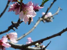 Primavera en Buenos Aires, primeros florecimientos