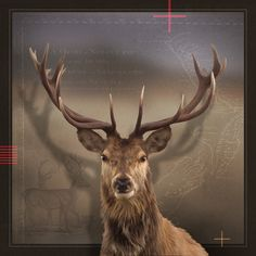 Art Print - x Deer, Moose Art, Art Prints, Gallery, Artist, Artwork, Pictures, Animals, Art Impressions