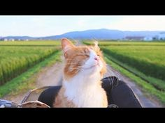 How I Trained My Cats - We Love Cats and Kittens