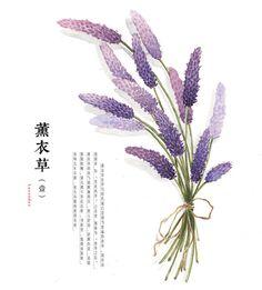 hand drawing watercolor plants--lavender by GaloShining.deviantart.com on @deviantART