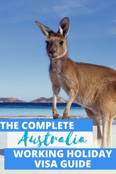 Roadtrip Australia, Australia Travel Guide, Visit Australia, Road Trip New Zealand, New Zealand Travel, Working Holiday Visa, Working Holidays, Flood Insurance, Best Insurance