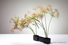 Ikebana arrangement for the online class on Grasses. Subscribe here…