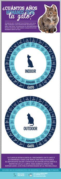Conocer la edad de tu gato te sirve para responder a las necesidades que tiene en cada una de las etapas de su vida.