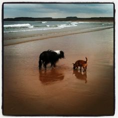 Rupert and Marley Dogs, Animals, Animales, Animaux, Pet Dogs, Doggies, Animal, Animais