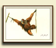 Orangutan. animal . Forest wild animal decor. Monkey art wall. Frame and mat not included, just the print. A reproduction of my original
