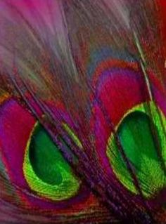 Feathers, Color combination is beautiful!