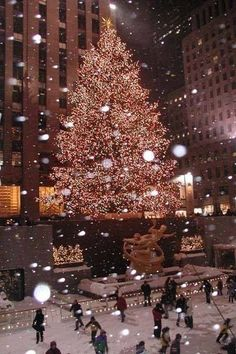 The tree in Rockefeller Center