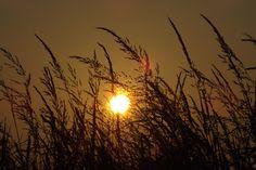 sunshandows