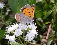 My garden will be a home for pollinators such as bees and butterflies. Pollinators are being threatened because their habitats are being destroyed. To the pollinators: Mi jardin es su casa.