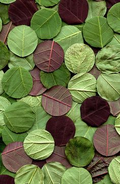 circle :: leaves - this could be good for my digital art placement, thinking of trying some land art photography. Land Art, Patterns In Nature, Textures Patterns, Nature Pattern, Wallpaper Texture, Organic Forms, Art Et Nature, Shades Of Green, Green And Purple