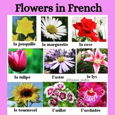 """15 mentions J'aime, 0 commentaires - Francopedia (@franco_pedia) sur Instagram: """"Do you know how to write and say different types of flowers in French?🌸🏵🌹🌺🌻🌼🌷⚘ As, these are the…"""""""