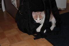 Kissaihmisiä Cats, Animals, Gatos, Animales, Animaux, Animal, Cat, Animais, Kitty