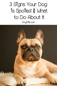 When you know the signs your dog is spoiled, you can fix the problem. Read on to learn the top three and what to do about it! Annorexia Tips, Health And Wellness, Health Tips, Dog Organization, Cool Dog Houses, Best Dog Training, Brain Training, Best Dog Toys, Small Puppies