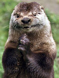 Sinister Otter Is Sinister - February 26, 2011