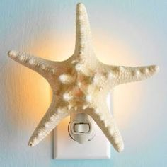 Light the Night with a Starfish, Sand Dollar or a Shell!