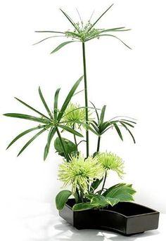 Ikebana con Papiro, dahlias y en la base hoja de hosta o similar. Perfecto para dar sensación de fresco en esta época.