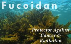 100′s of Studies Prove this One Plant Compound Kills Cancer, Protects Against Radiation