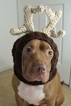 Transform your large dog into a reindeer this fall and winter with this crochet snood. Dark brown with taupe antlers, this snood is a great way to celebrate the holiday season while keeping your dog warm. Antlers are bendable. Reindeer Dog Snood Crochet Made to Order by courtanai on Etsy, $40.00