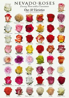 Rose Varieties - Colours & Names Rose Color Meanings, Flower Meanings, Fresh Flowers, Pretty Flowers, Colorful Flowers, Flower Chart, Types Of Roses, Different Types Of Flowers, Rose Varieties