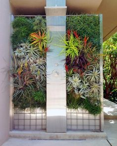 Bathroom Wondeful Vertical Garden Tropical Outdoor Shower Stainless Steel Head Shower Stone Tile Wall Living Wall Design Air Plant Tillandsia Plants Tropical Outdoor Shower And Bathroom