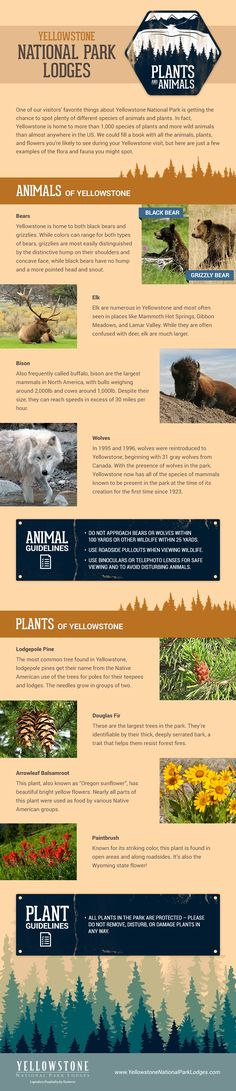 Spot These Plants and Animals in Yellowstone National Park! Infographic - Topic Money - Economics, Personal Finance and Business Diary Yellowstone Lodging, Yellowstone Nationalpark, Visit Yellowstone, Yellowstone Vacation, Yellowstone Camping, National Park Lodges, Us National Parks, Beautiful Places In America, All Nature