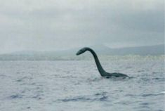 The Loch Ness Monster is a cryptid, reputedly a large unknown animal that inhabits Loch Ness in the Scottish Highlands. It is similar to other supposed lake . Weird Creatures, Mythical Creatures, Inverness, Lago Ness, Howleen Wolf, Legendary Monsters, Lake Monsters, Scary Tales, Catty Noir