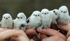 Cute Birds, Pretty Birds, Beautiful Birds, Cute Baby Animals, Animals And Pets, Funny Animals, Bird Pictures, Funny Animal Pictures, Animal Pics