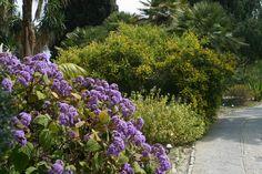 Bloemen en struiken die eventueel in de openbare ruimte geplaatst kunnen worden. Jamal