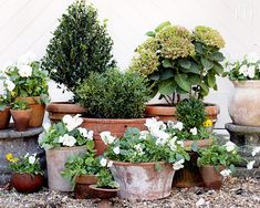 House Plant Maintenance Tips Tired Of Our Standard Symmetrical Planter Strategy, We Went In Search Of Some Gardening Inspiration, Which Led . Large Indoor Plants, Tall Plants, Hanging Plants, Landscape Nursery, Container Flowers, Flower Planters, House Plant Care, Outdoor Flowers, Colorful Plants