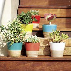 Carnivale Mini Planters | Crate and Barrel mini planter, garden patios, carnival mini, crate, barrel