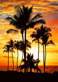 ^Palm tree sunset