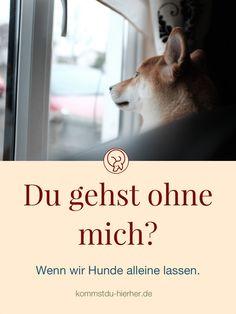 Ein schwieriges Kapitel. Was macht der Hund allein? Berufstätigkeit mit Hund   Wie lange Hunde allein lassen?   #Hundekörbchen #Hundeerziehung #Hund Dog, Movies, Movie Posters, Dog Training School, Alone, Nursing Care, Studying, Diy Dog, Films