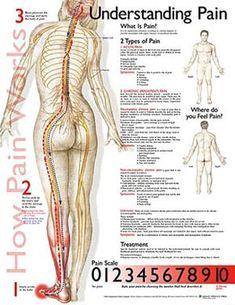 Understanding Pain anatomy poster defines the types of pain lists symptoms for each and includes a pain scale. Douleur Nerf, Foot Detox Soak, Pain Scale, Scoliosis Exercises, Calendula Benefits, Coconut Health Benefits, Nursing Notes, Neurology, Human Anatomy
