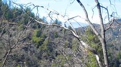 A February Day Up In The San Bernardino Mountains