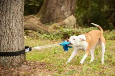 Super Tug Dog Toy by Squishy Face Studio - Pit Bull Tough - Spring Pole Alternative