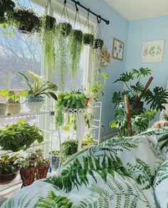 Best Indoor Hanging Plants, Plants For Hanging Baskets, Room With Plants, Flowering Succulents, Planting Succulents, Planting Flowers, Climber Plants, Arrowhead Plant, Hoya Plants
