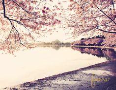 Washington DC and Cherry Blossoms 11x14 Photo Print, Jefferson Monument Fine Art Photography on Etsy, $35.00