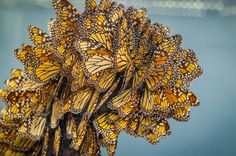 So Many Butterflies | Content in a Cottage