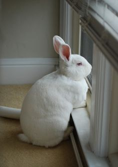 """""""The Easter Bunny, pictured earlier today"""" Cute Baby Bunnies, Funny Bunnies, Animals Images, Animal Pictures, Baby Animals, Cute Animals, Animals And Pets, Beautiful Rabbit, Fauna"""