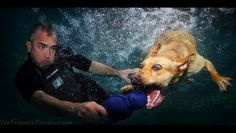 underwater dog photo shoot with Cesar Milan--Seth Casteel