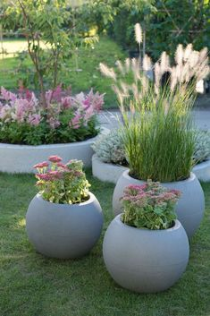 Garden trends 2019 - green plants with flowers in pastel tones and ornamental grasses . - gartengestaltung ideen - Garden trends 2019 – green plants with flowers in pastel tones and ornamental grasses … - Planters For Shade, Garden Planters, Indoor Garden, Patio Plants, Diy Garden, Outdoor Potted Plants, Pavers Patio, Patio Stone, Gravel Garden