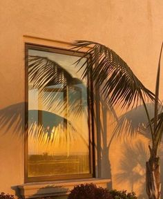 palm tree, shadow aesthetic, aesthetic sunsets, west coast life Boujee Aesthetic, Aesthetic Pictures, Tropical, Shadow Play, Tumblr, Sea World, Bastille, Golden Hour, Wall Collage