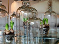 paper whites and cloches